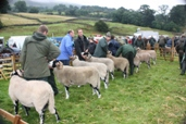Reeth Show 2009 - Swaledale Tup Judging