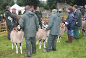 Reeth Show 2009 - Swaledale sheep judging