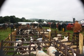 Reeth show 2009 - Sheep Pens
