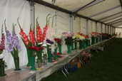 Reeth show 2009 - flowers