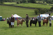 Reeth Show 2010 - Horse judging