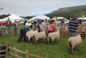 Reeth show 2012 - Teeswater sheep judging